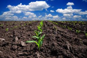 Vitalità della Terra = Vitalità degli Alimenti
